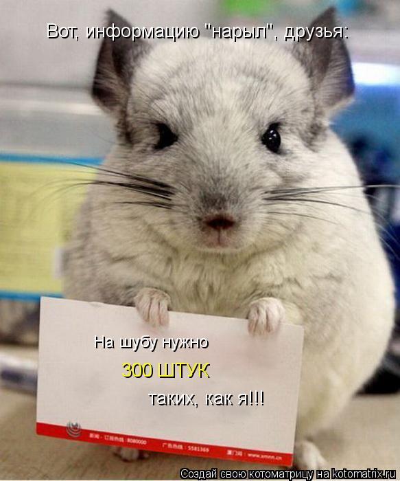 """Котоматрица: Вот, информацию """"нарыл"""", друзья: 300 ШТУК На шубу нужно  таких, как я!!!"""