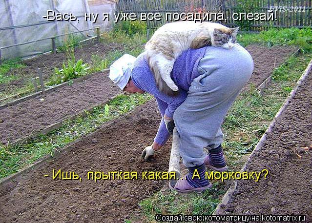 Котоматрица: -Вась, ну я уже все посадила, слезай! - Ишь, прыткая какая... А морковку?