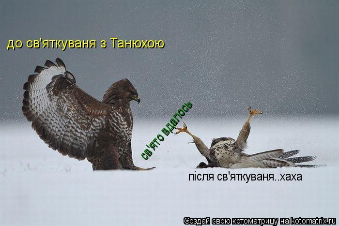 Котоматрица: до св'яткуваня з Танюхою після св'яткуваня..хаха св'ято вдалось