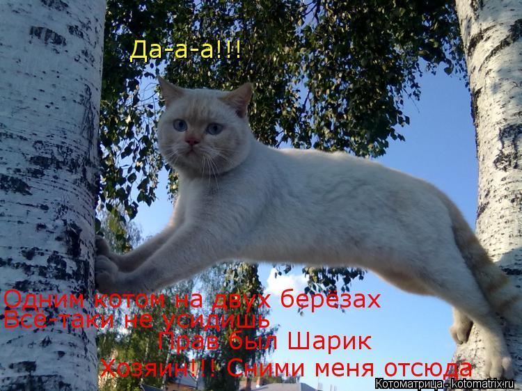 Котоматрица: Да-а-а!!! Одним котом на двух берёзах Всё-таки не усидишь Прав был Шарик Хозяин!!! Сними меня отсюда