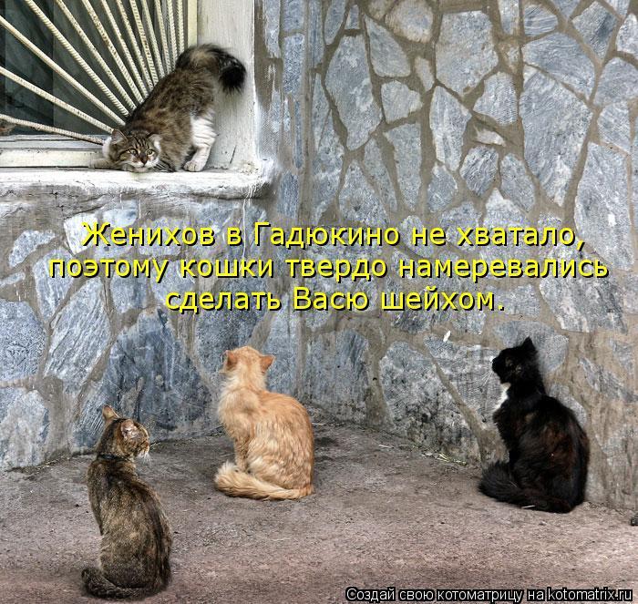Котоматрица: Женихов в Гадюкино не хватало,  поэтому кошки твердо намеревались сделать Васю шейхом.