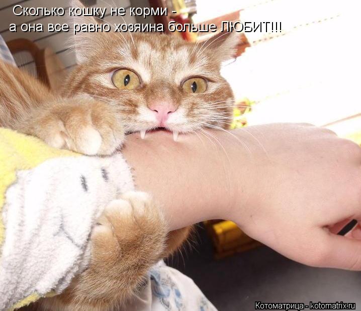 Котоматрица: Сколько кошку не корми - а она все равно хозяина больше ЛЮБИТ!!!