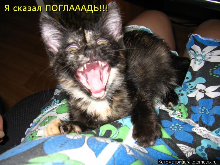 Котоматрица: Я сказал ПОГЛАААДЬ!!!
