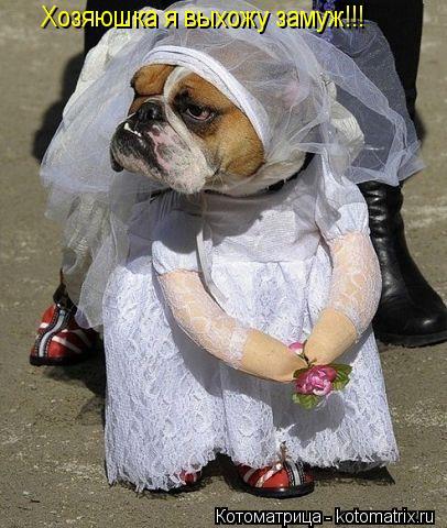 Котоматрица: Хозяюшка я выхожу замуж!!!