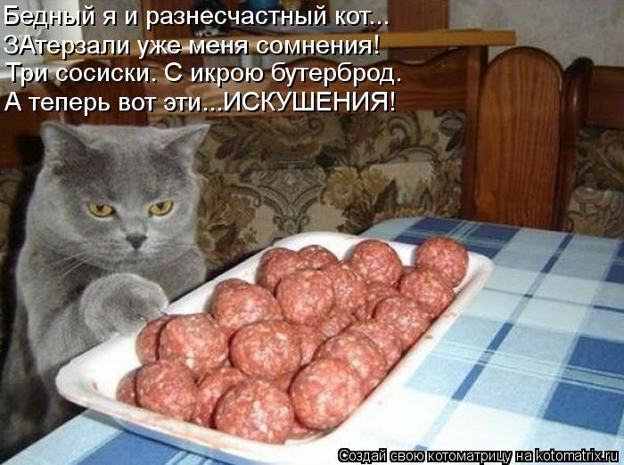 Котоматрица: Бедный я и разнесчастный кот... ЗАтерзали уже меня сомнения! Три сосиски. С икрою бутерброд. А теперь вот эти...ИСКУШЕНИЯ!