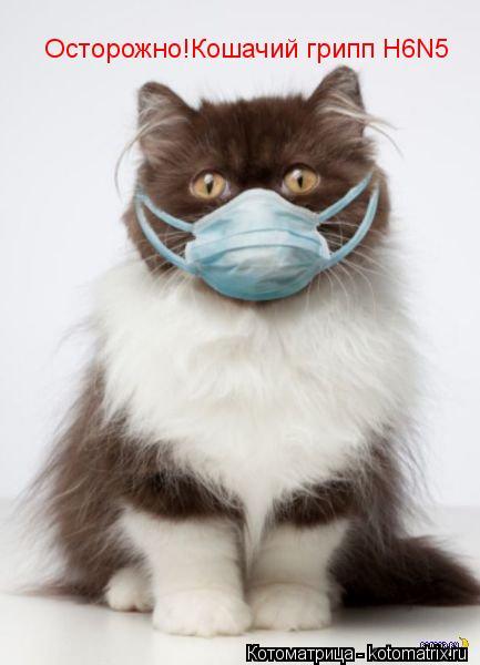 Котоматрица: Осторожно!Кошачий грипп H6N5