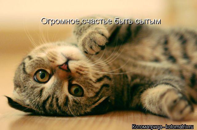 Котоматрица: Огромное счастье быть сытым