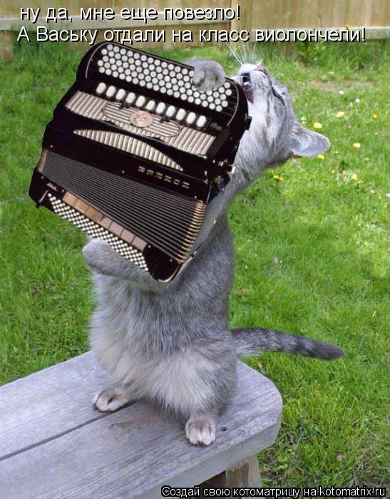 Котоматрица: ну да, мне еще повезло! А Ваську отдали на класс виолончели!