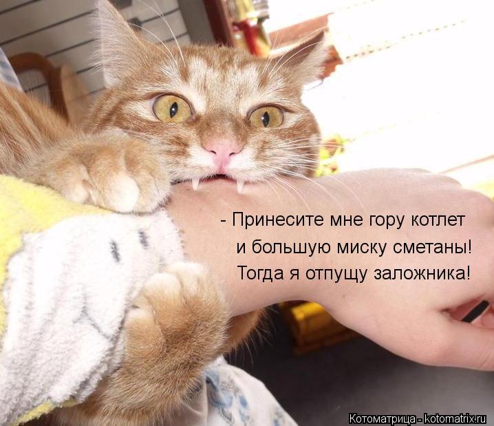Котоматрица: - Принесите мне гору котлет и большую миску сметаны! Тогда я отпущу заложника!