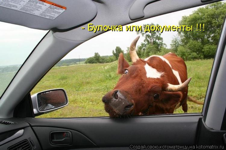 Котоматрица: - Булочка или документы !!!
