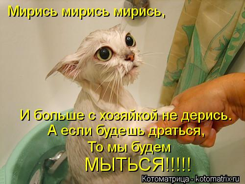 Котоматрица: Мирись мирись мирись, И больше с хозяйкой не дерись. А если будешь драться, То мы будем  МЫТЬСЯ!!!!!