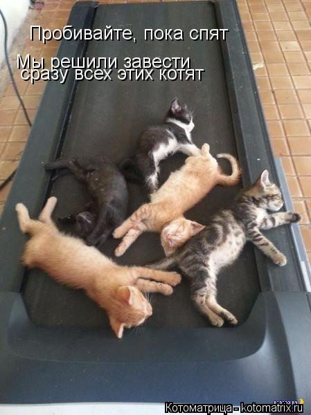 Котоматрица: Пробивайте, пока спят Мы решили завести   сразу всех этих котят