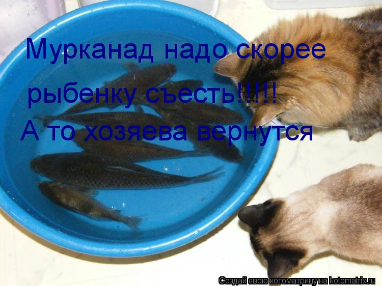 Котоматрица: рыбенку съесть!!!!! А то хозяева вернутся Мурканад надо скорее