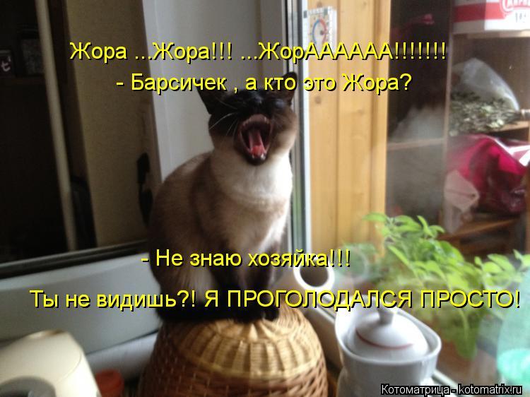 Котоматрица: Жора ...Жора!!! ...ЖорАААААА!!!!!!!  - Барсичек , а кто это Жора? - Не знаю хозяйка!!!    Ты не видишь?! Я ПРОГОЛОДАЛСЯ ПРОСТО!  Ты не видишь?! Я ПРОГОЛОДАЛ