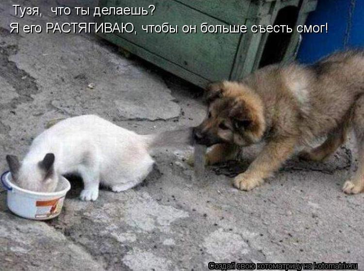 Котоматрица: Тузя,  что ты делаешь? Я его РАСТЯГИВАЮ, чтобы он больше съесть смог!