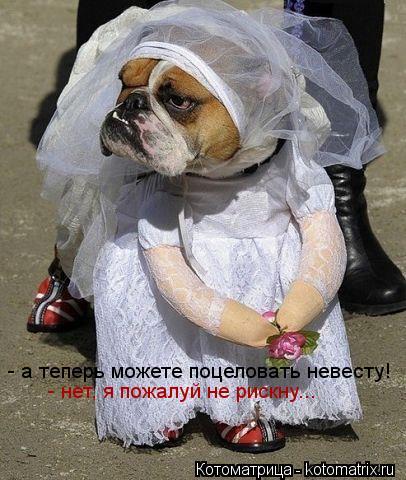 Котоматрица: - а теперь можете поцеловать невесту! - нет, я пожалуй не рискну...