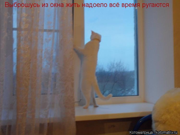 Котоматрица: Выброшусь из окна жить надоело всё время ругаются