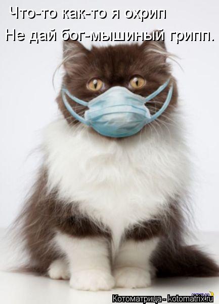 Котоматрица: Что-то как-то я охрип Не дай бог-мышиный грипп.