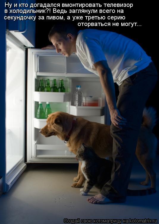 Котоматрица: Ну и кто догадался вмонтировать телевизор в холодильник?! Ведь заглянули всего на  секундочку за пивом, а уже третью серию   оторваться не мо