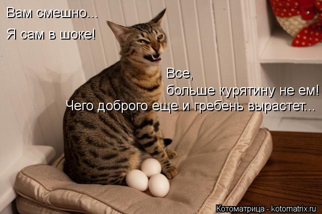 Котоматрица: Вам смешно... Я сам в шоке! больше курятину не ем! Все, Чего доброго еще и гребень вырастет...