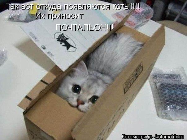 Котоматрица: Так вот откуда появляются коты!!!! Их приносит ПОЧТАЛЬОН!!!