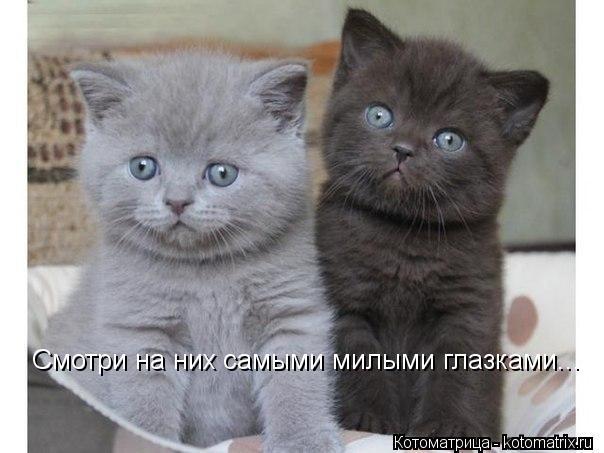 Котоматрица: Смотри на них самыми милыми глазками...