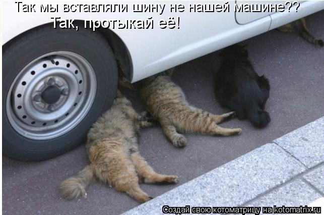 Котоматрица: Так мы вставляли шину не нашей машине?? Так, протыкай её!