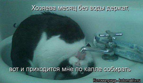 Котоматрица: Хозяева месяц без воды держат,  вот и приходится мне по капле собирать