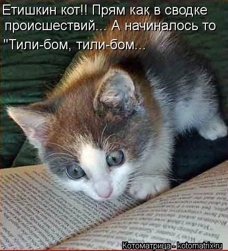 """Котоматрица: Етишкин кот!! Прям как в сводке происшествий... Етишкин кот!! Прям как в сводке  происшествий... А начиналось то """"Тили-бом, тили-бом..."""