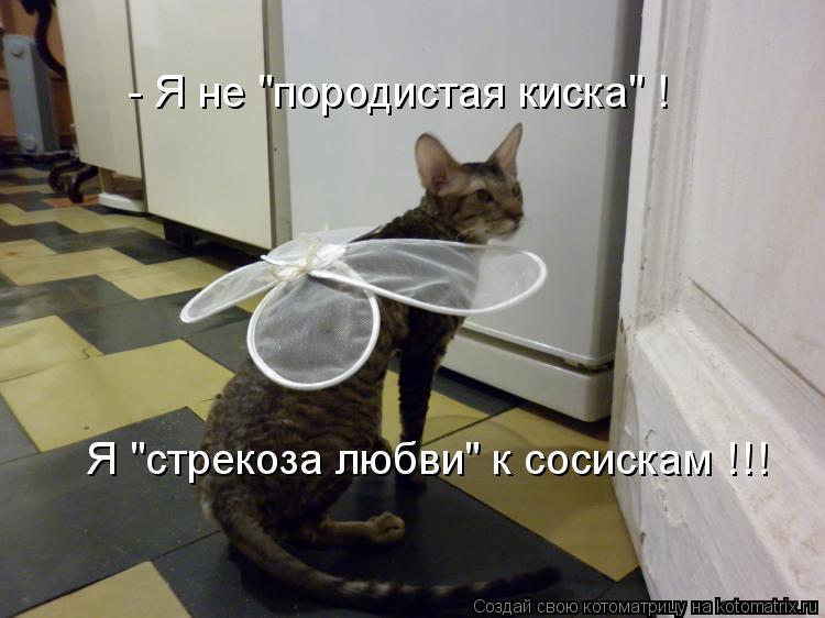 "Котоматрица: Я ""стрекоза любви"" к сосискам !!! - Я не ""породистая киска"" !"