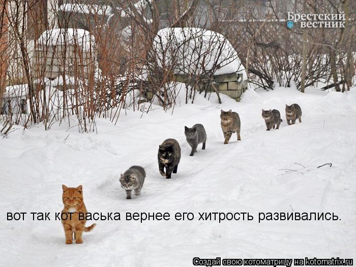 Котоматрица: вот так кот васька вернее его хитрость развивались.