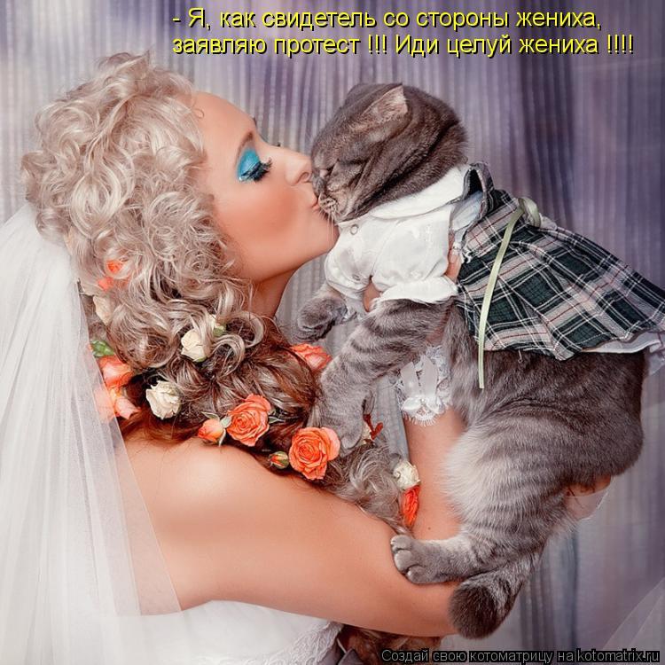 Котоматрица: - Я, как свидетель со стороны жениха, заявляю протест !!! Иди целуй жениха !!!!