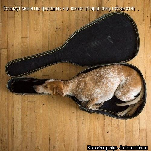 Котоматрица: Возьмут меня на праздник я в чехле гитары сижу,незаметят...