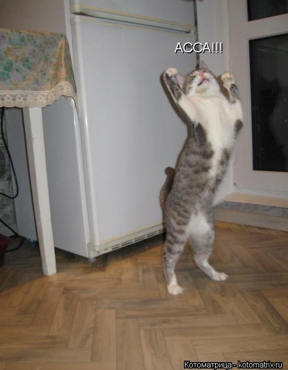 Котоматрица: АССА!!!