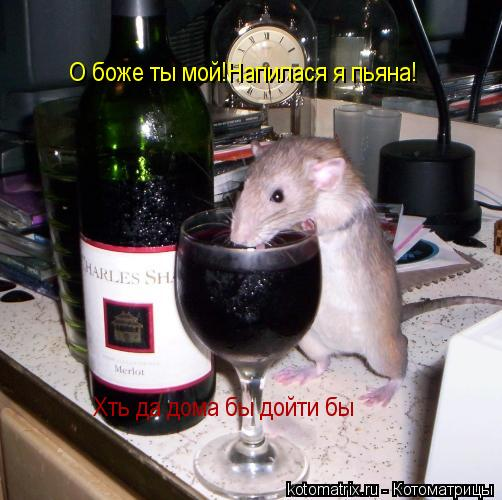 Котоматрица: О боже ты мой!Напилася я пьяна! Хть да дома бы дойти бы