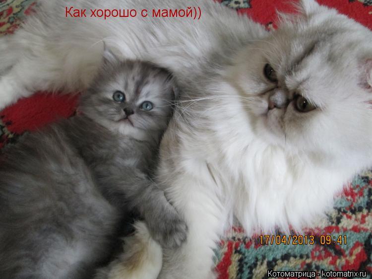 Котоматрица: Как хорошо с мамой))