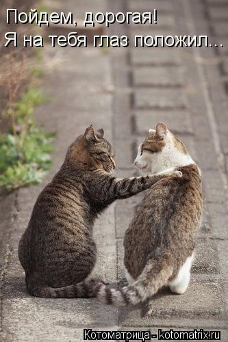 Котоматрица: Я на тебя глаз положил... Пойдем, дорогая!