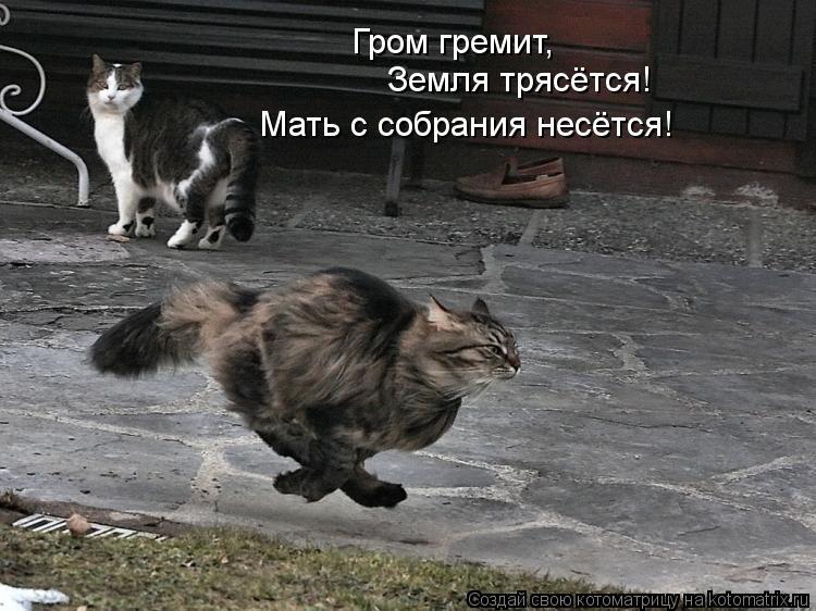 Котоматрица: Гром гремит, Земля трясётся! Мать с собрания несётся!