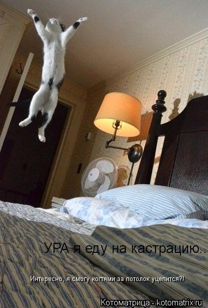 Котоматрица: УРА я еду на кастрацию... Интересно, я смогу когтями за потолок уцепится?!