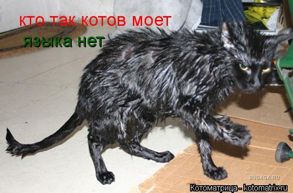 Котоматрица: кто так котов моет   языка нет