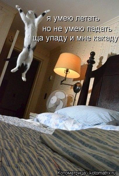Котоматрица: я умею летать но не умею падать ща упаду и мне какаду