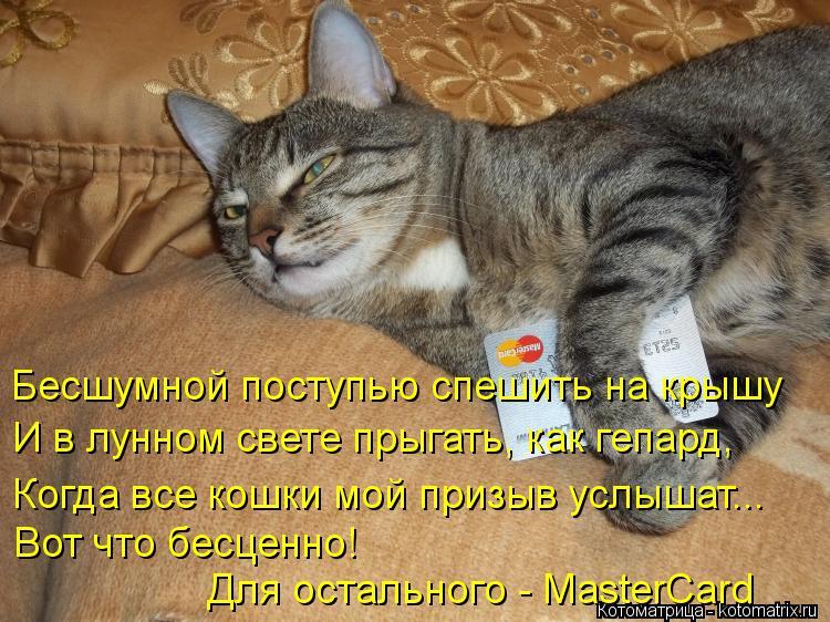 Котоматрица: Бесшумной поступью спешить на крышу  И в лунном свете прыгать, как гепард,  Когда все кошки мой призыв услышат...  Вот что бесценно!  Для остал
