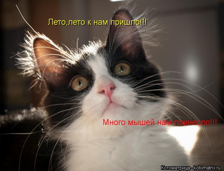 Котоматрица: Лето,лето к нам пришло!!! Много мышей нам принесло!!!