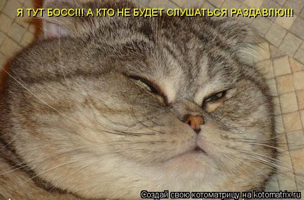 Котоматрица: Я ТУТ БОСС!!! А КТО НЕ БУДЕТ СЛУШАТЬСЯ РАЗДАВЛЮ!!!