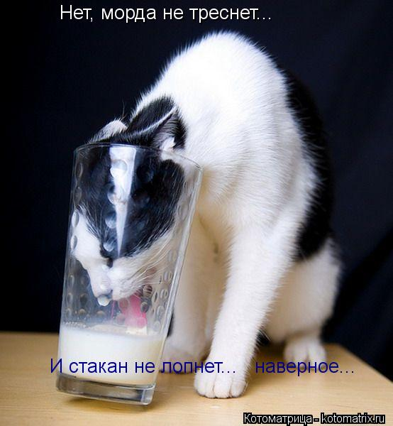 Котоматрица: Нет, морда не треснет... И стакан не лопнет...   наверное...