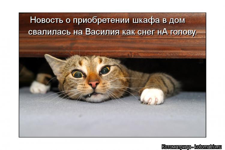 Котоматрица: Новость о приобретении шкафа в дом свалилась на Василия как снег нА голову.
