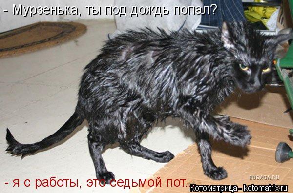 Котоматрица: - я с работы, это седьмой пот... - Мурзенька, ты под дождь попал?