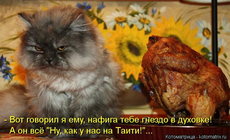 """Котоматрица: - Вот говорил я ему, нафига тебе гнездо в духовке! А он всё """"Ну, как у нас на Таити!""""..."""