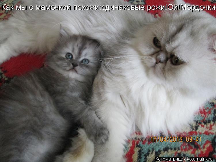 Котоматрица: Как мы с мамочкой похожи:одинаковые рожи!Ой!Мордочки!