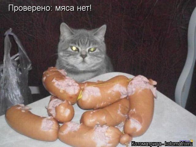 Котоматрица: Проверено: мяса нет!